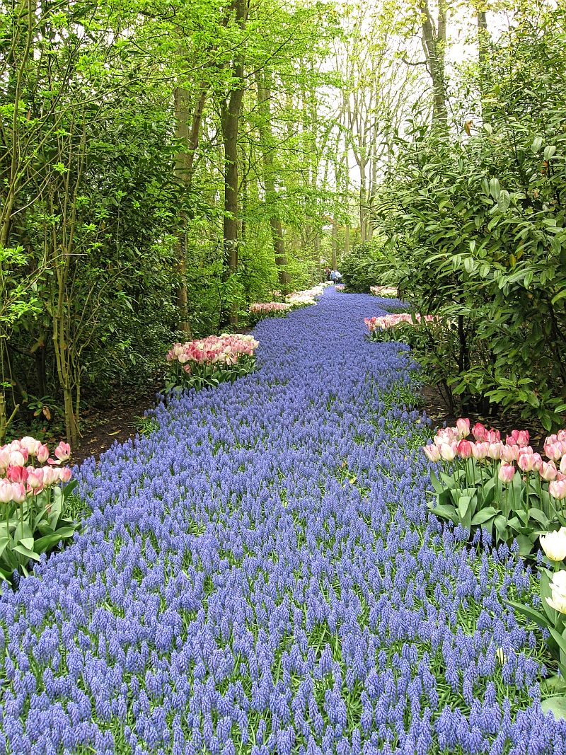 blue river design, tulips, Keukenhof, Keukenhof gardens, Lisse, the Netherlands