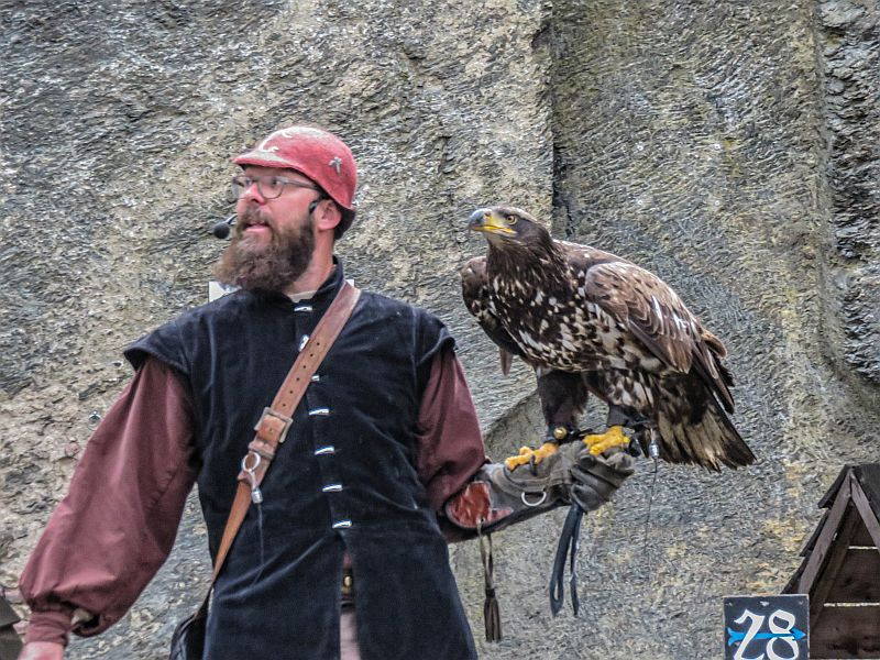 Man holding a big eagle, part of the Birds of Prey Shaw at the Bouillon castle in Wallonia, Belgium