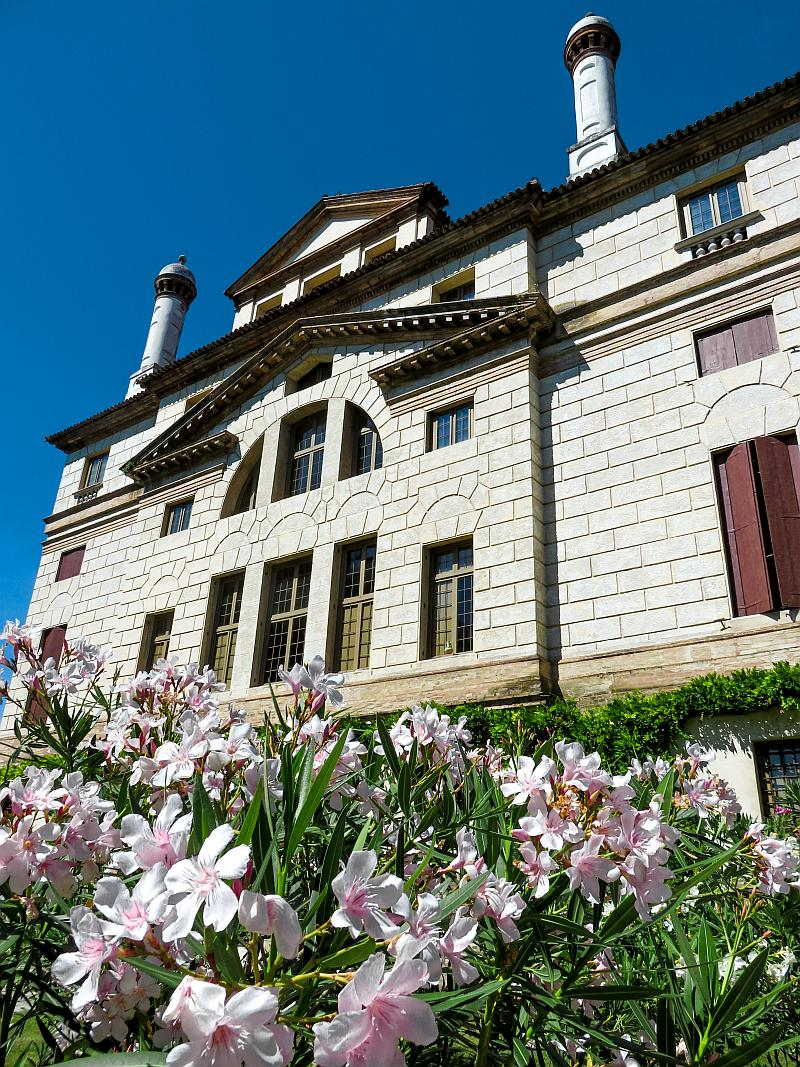 rose oleander flowers in bloom in front of a stately building, villa Foscari La Malcontenta in Italy