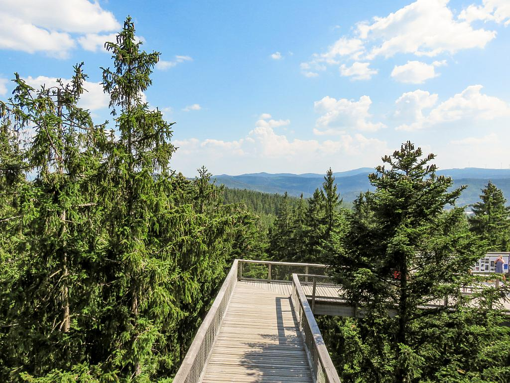 a wooden walkway at the level of the forest canopy, Treetop Walkway in Lipno, South Bohemia, Czech Republic