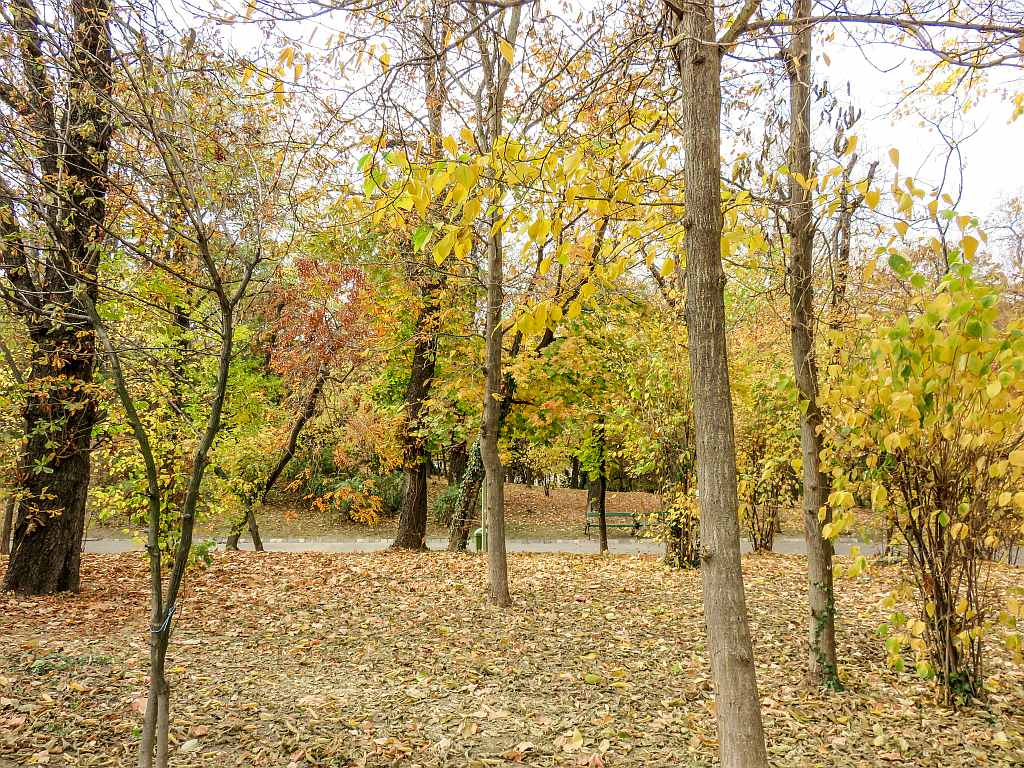 a park with trees and path in the autumn with yellow and red autumn foliage, Carol Park in Bucharest