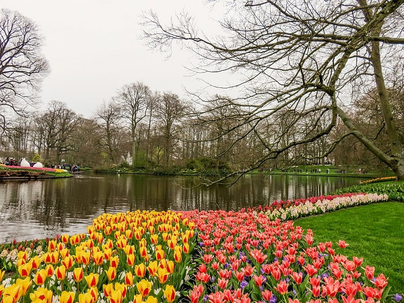 a small lake with lots of colorful tulips in front surrounded by trees early in the spring in Keukenhof